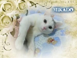 Mikado i gatti di millevite for Allontanare i gatti