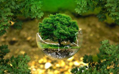 La Giornata della Terra: facciamo qualcosa di concreto, con Ecosia!